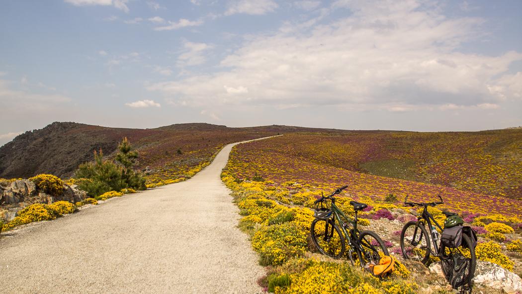 bicicleta num campo de flores na montanha